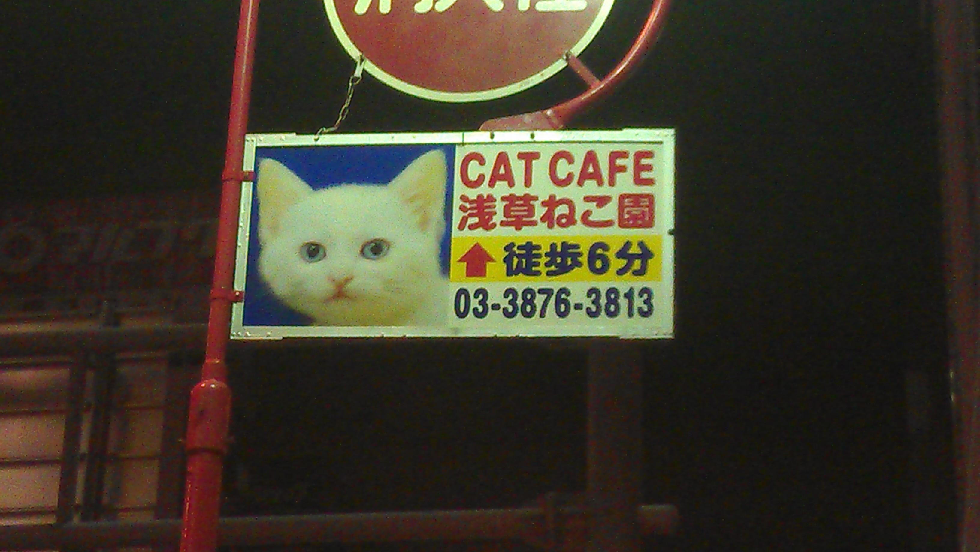 """cat cafe"""