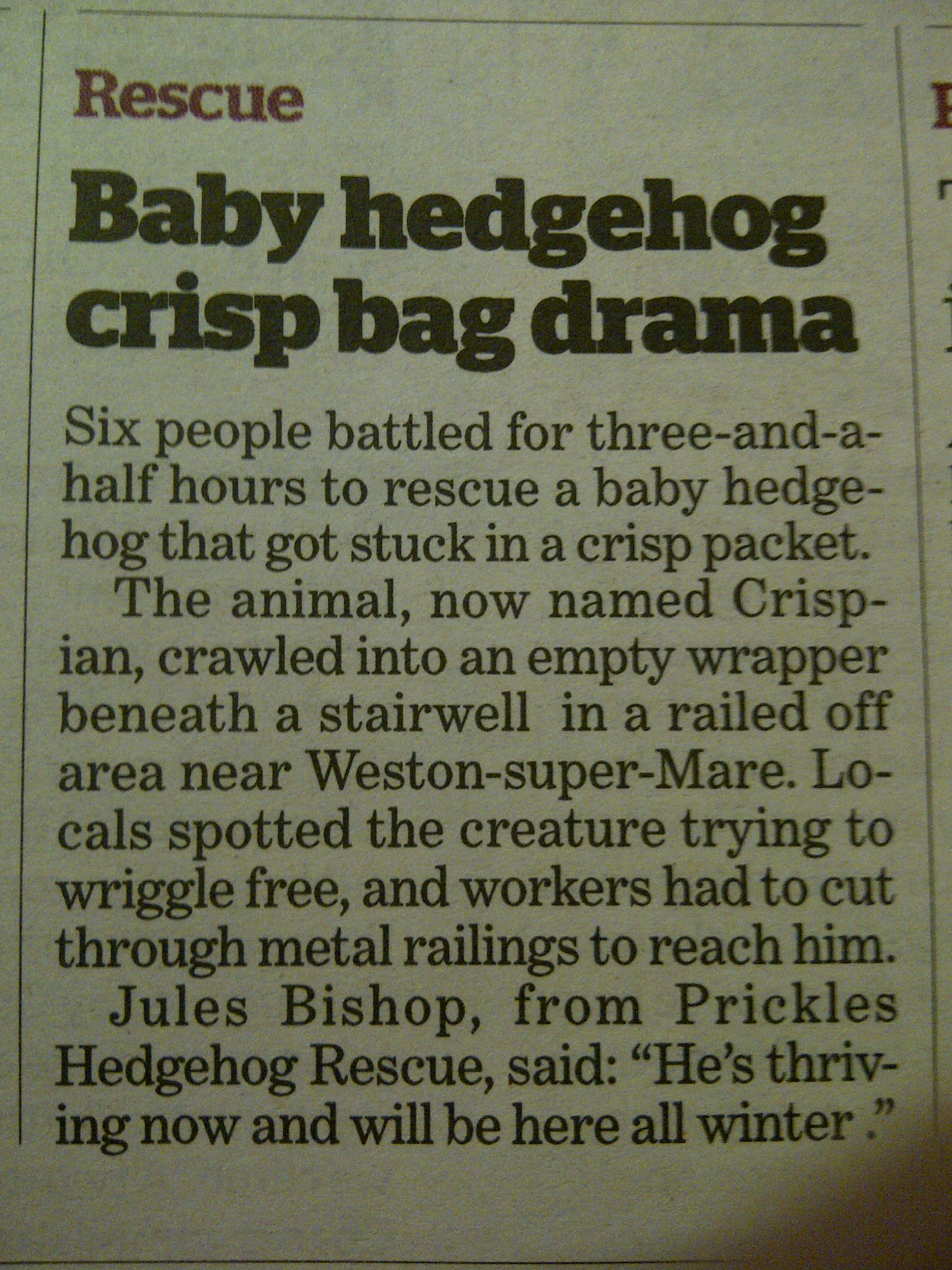 """baby hedgehog"""