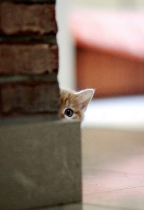"""""""cute kitten"""""""