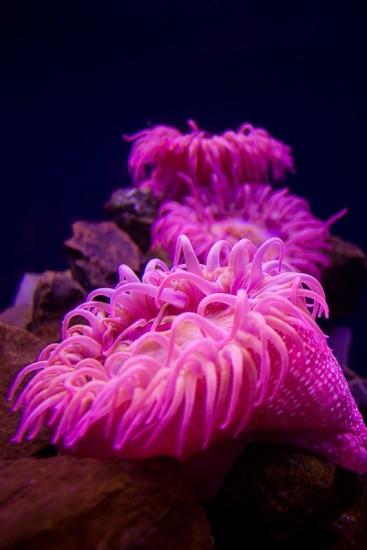 """sea anemone"""